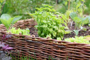kiek reikia žemių grunto komposto mulčio pakeltoms paprastoms lysvėms