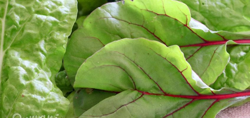kaip šaldyti mangoldus lapinius burokėlius